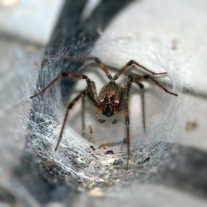 fishers-indiana-spider-pest-control